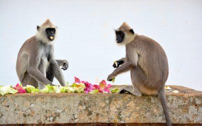 Sri Lanka #2 – Mihintale, le berceau du bouddhisme sri lankais