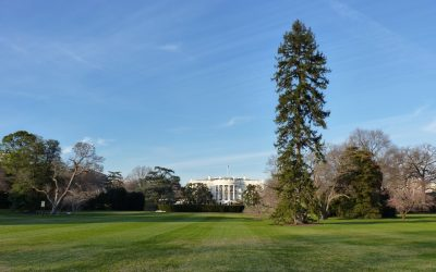 Washington D.C. – les incontournables de la capitale américaine