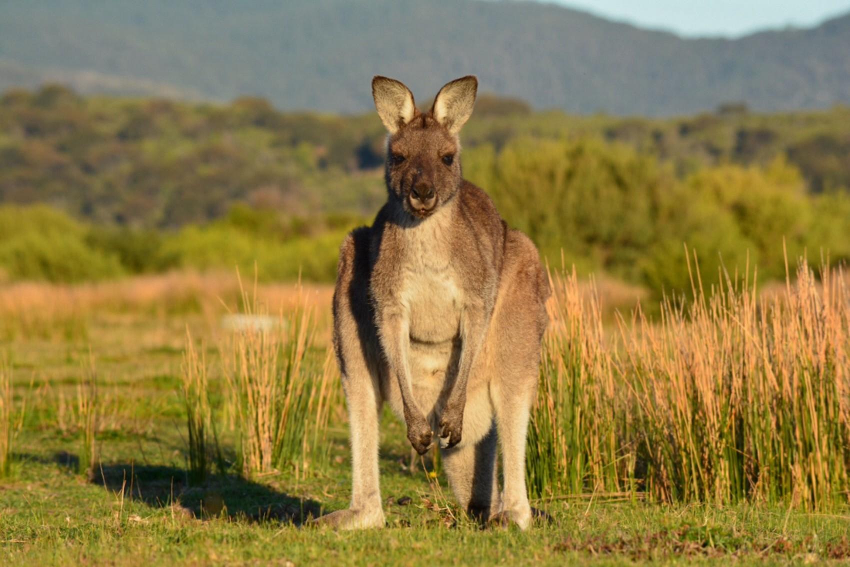Australie Diapo (1)