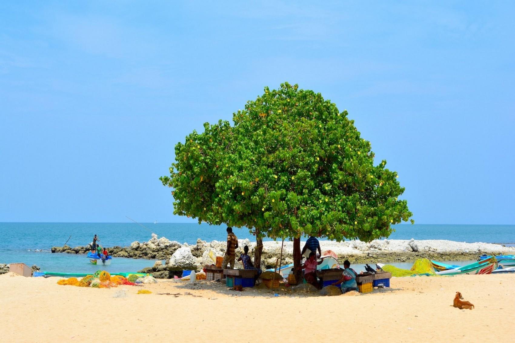 Sri Lanka Diapo (7)