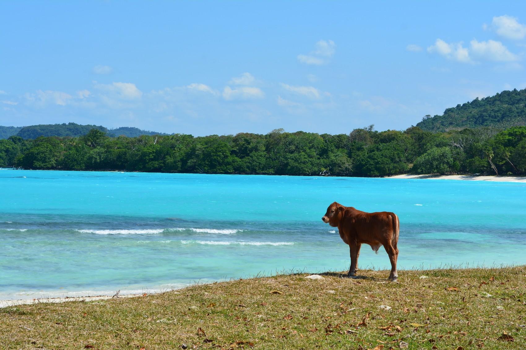 Vanuatu Diapo (32)