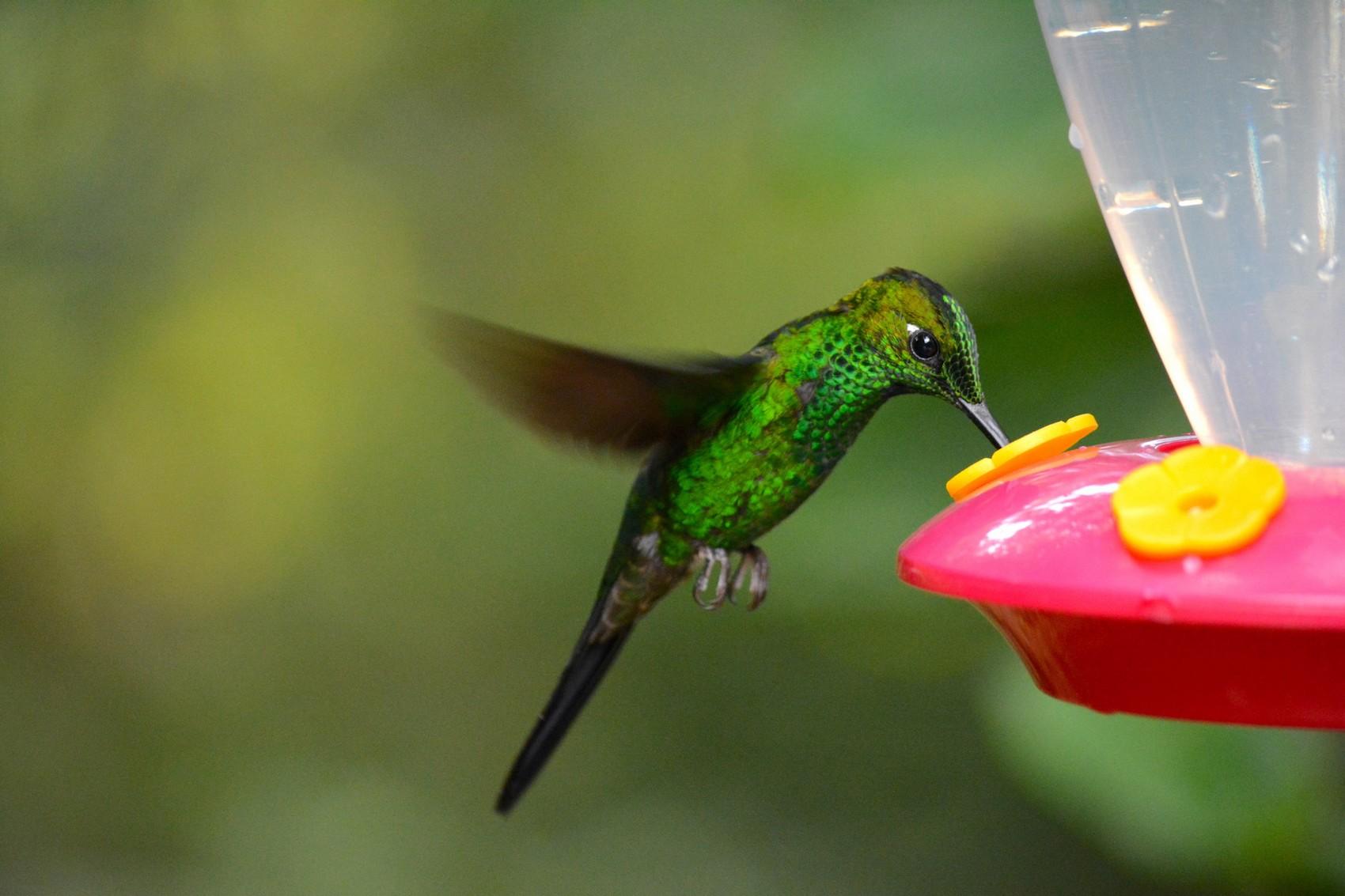 Reserve Monteverde (18)