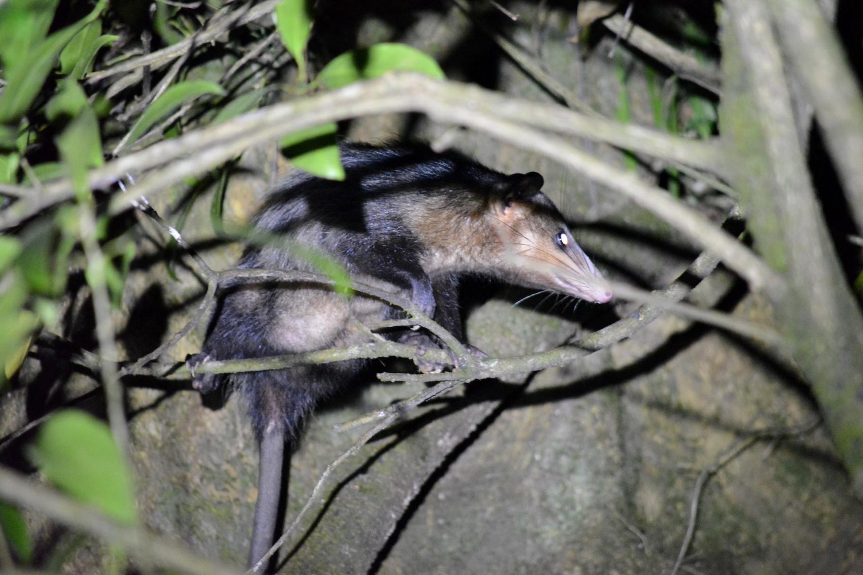 Reserve Monteverde (19)