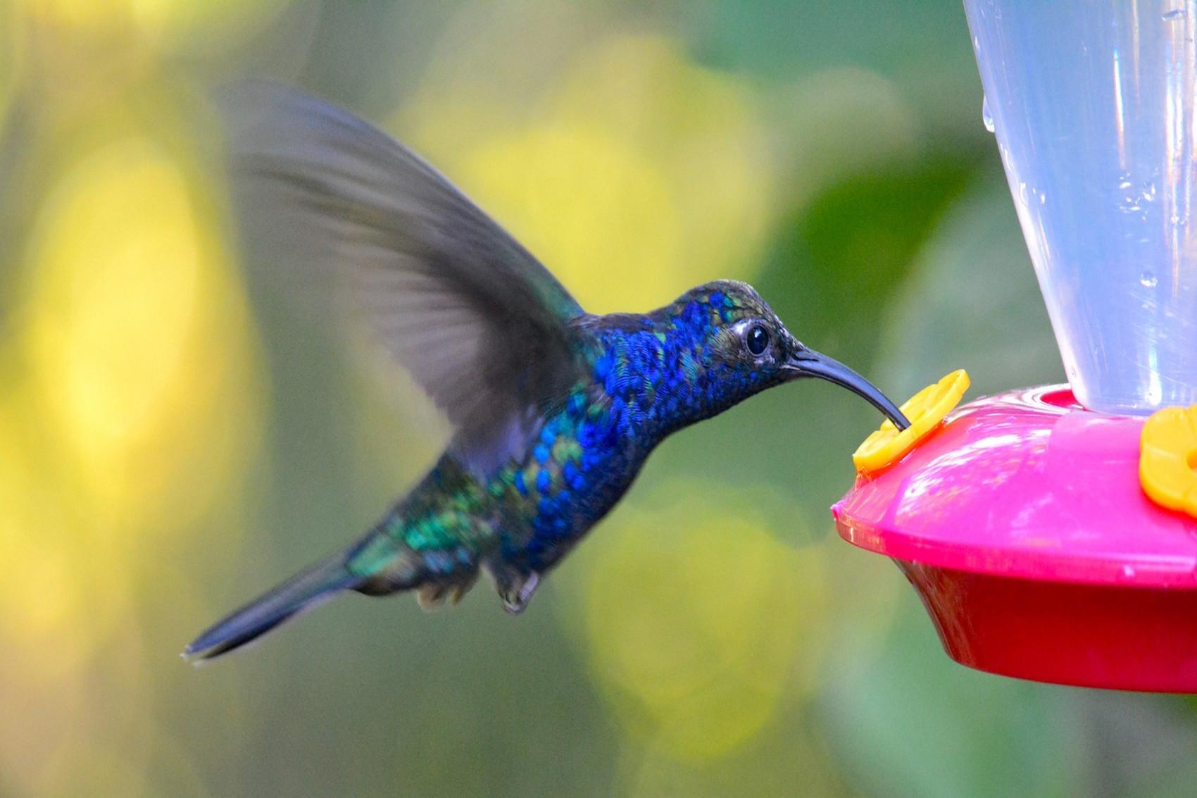 Reserve Monteverde (6)