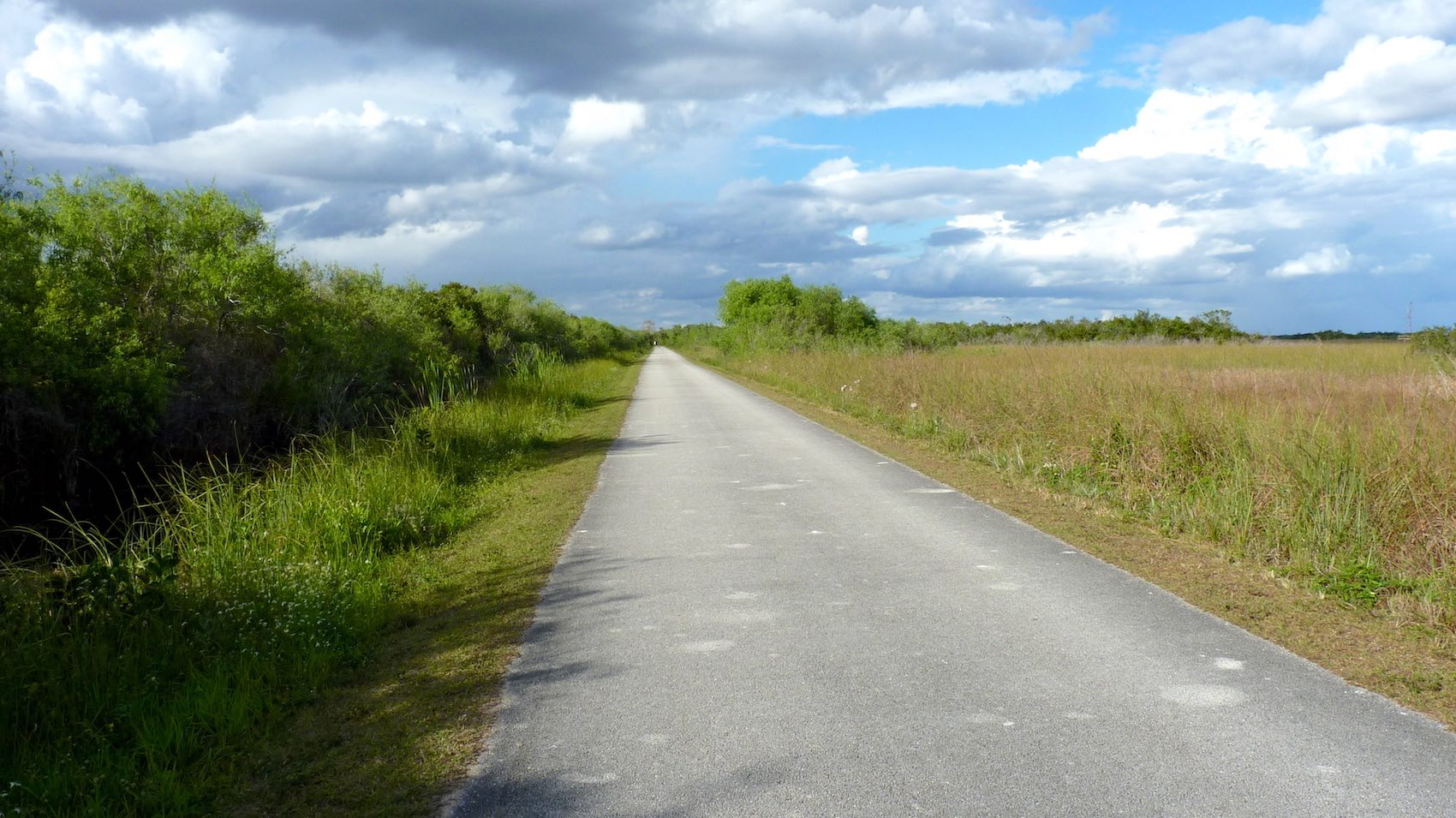 Landscape Everglades