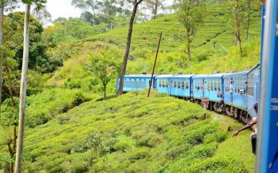 Sri Lanka #8 – Dans les montagnes du Centre du Sri Lanka, Nuwara Eliya et Ella