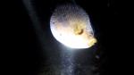 Plongée de nuit Vanuatu
