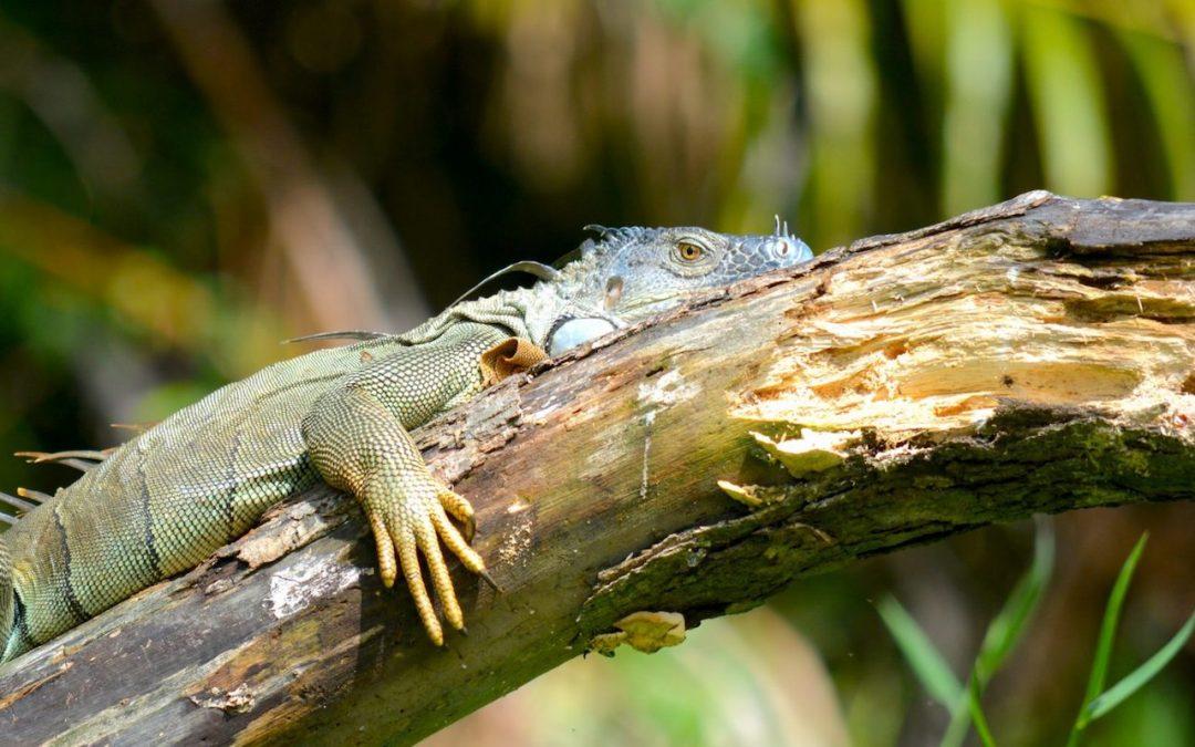 Costa Rica #2 – Immersion dans les canaux du parc national de Tortuguero
