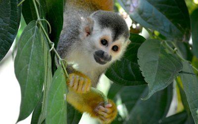 Costa Rica #3 – Rencontres animalières au parc national Manuel Antonio sur la côte Pacifique