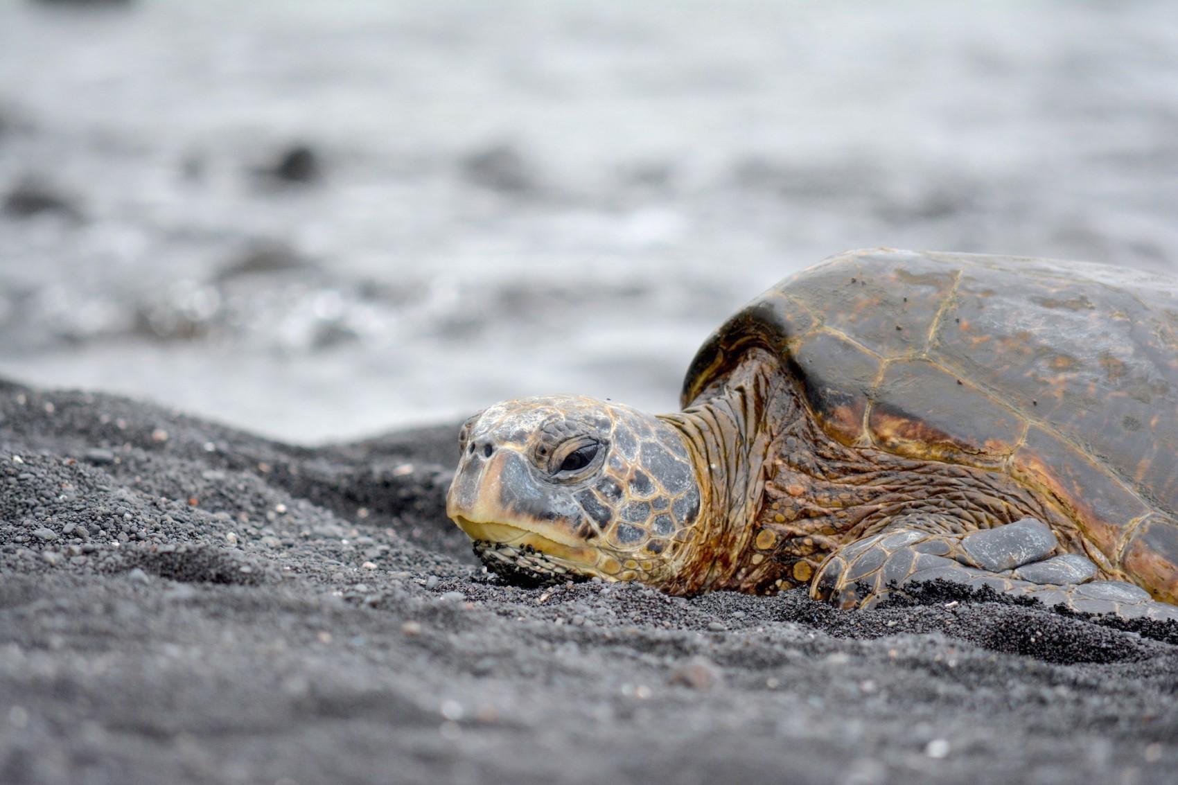 Hawai Diapo (14)