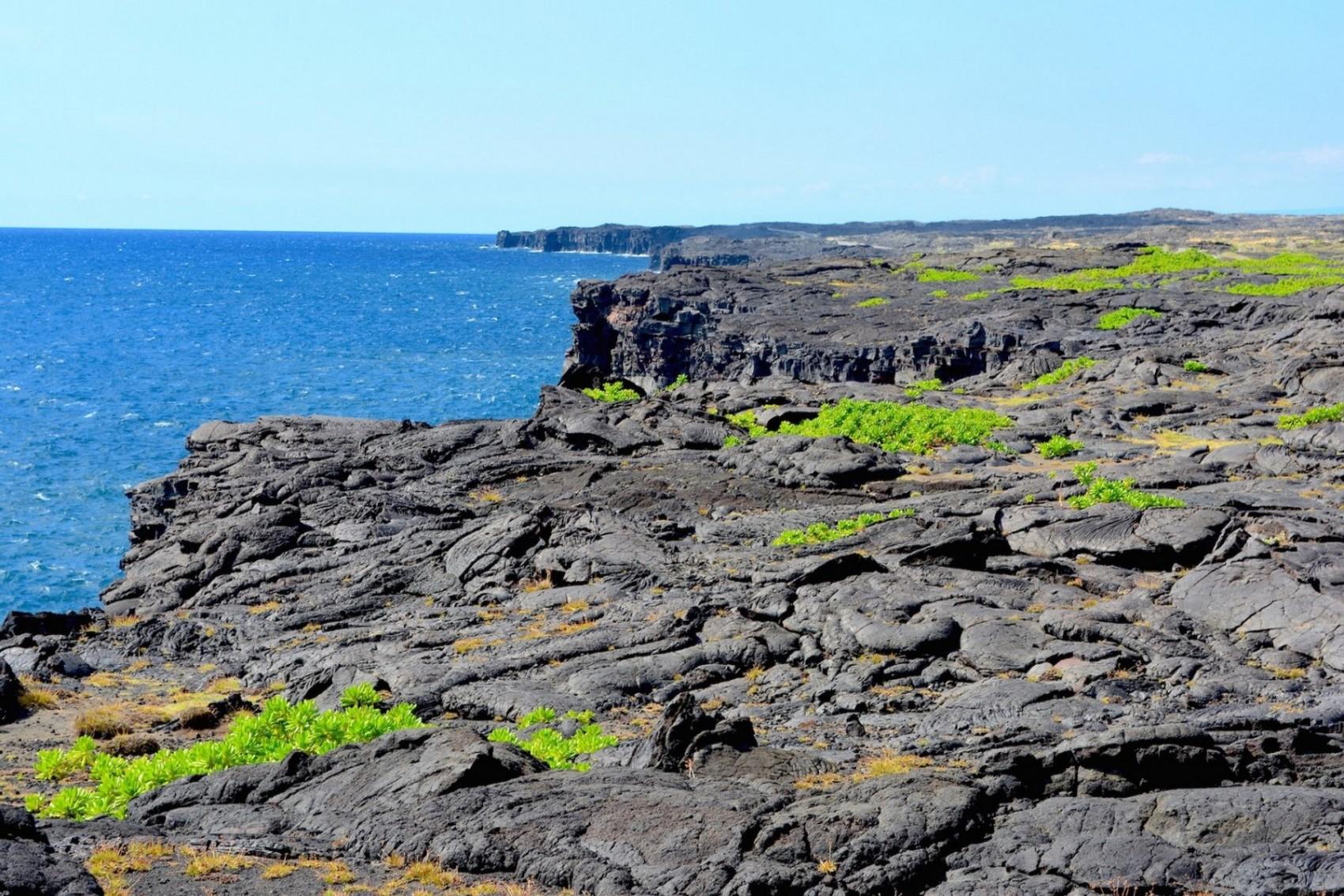 Hawai Diapo (5)