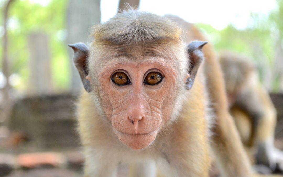 Sri Lanka, au coeur de Ceylan (Vidéo)