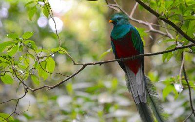 Costa Rica, Pura Vida (Vidéo)