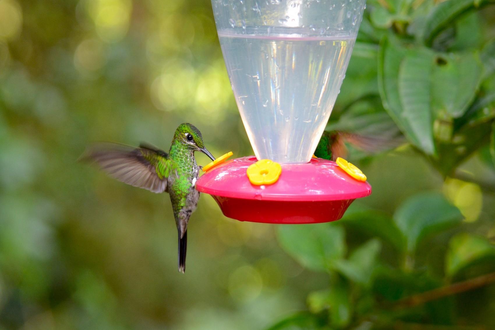 Reserve Monteverde (15)