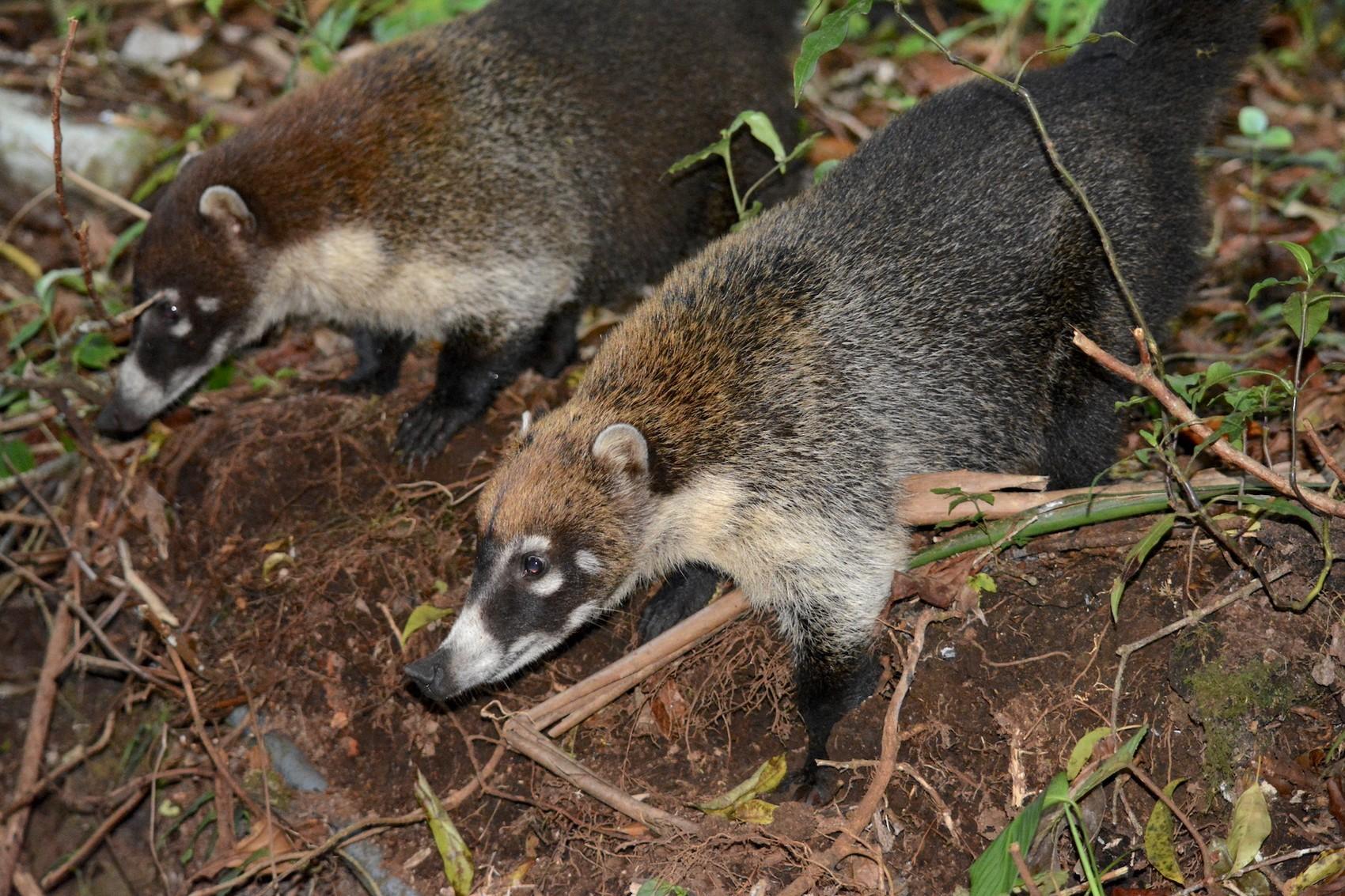 Reserve Monteverde (7)
